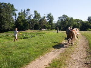 Ponies ready to plough at Pfeiffer centre