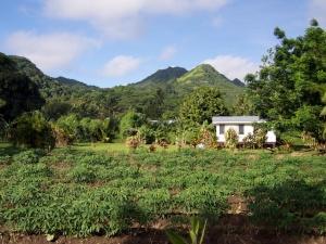 Rarotongan home and land